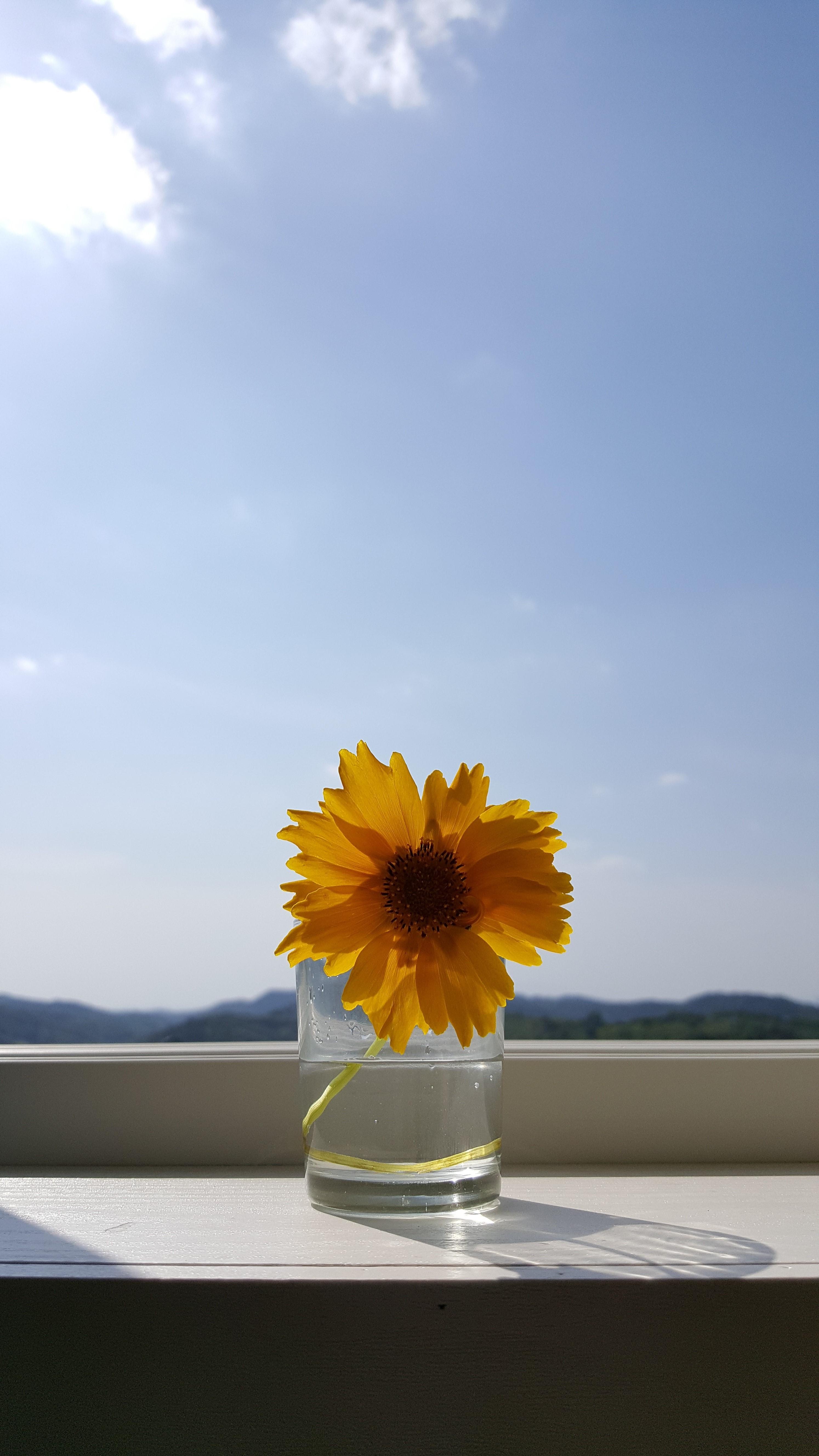 꽃 원본.jpg
